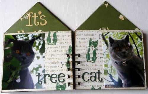 Cat House 4