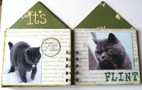 Cat House 6